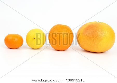 the citrus fruits on a white background