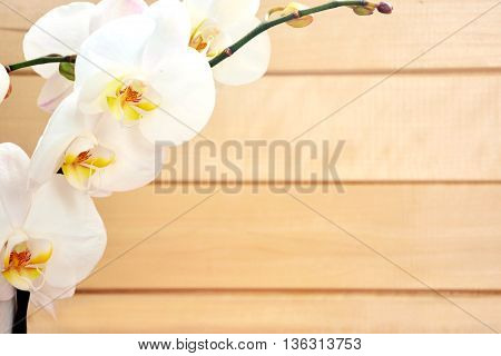 White orchid on wooden background. Photo with orchids in the corner.