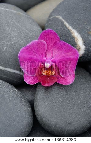 Red orchid with stones background