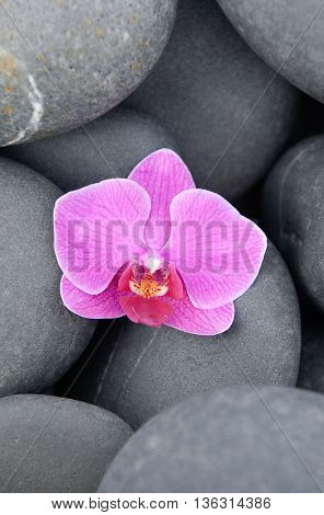 Pink orchid with stones