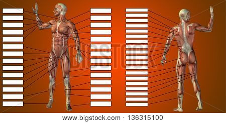 3D illustration of a concept or conceptual human man anatomy and muscle for sport and textbox on red background
