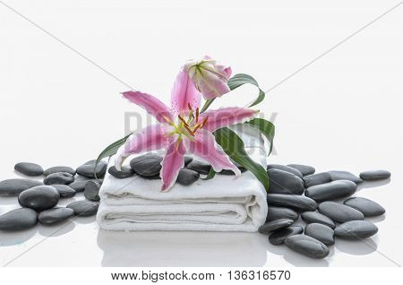 Lily on towel and pile of black stones