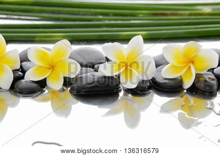 spa concept with zen stones and Frangipani and thin grove