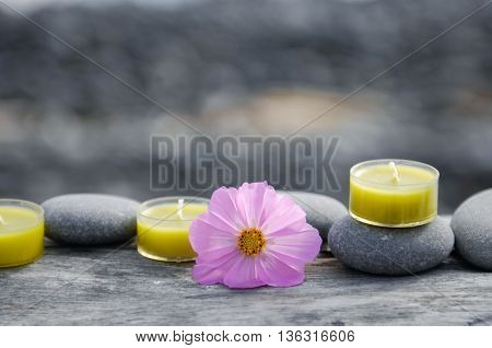 driftwood texture and pink flower ,candle ,gray stones