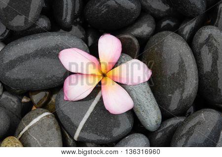 Frangipani with wet stones