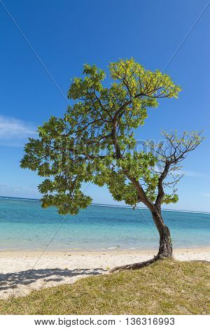 Tree On The Beach In Flic En Flac Mauritius Overlooking The Sea