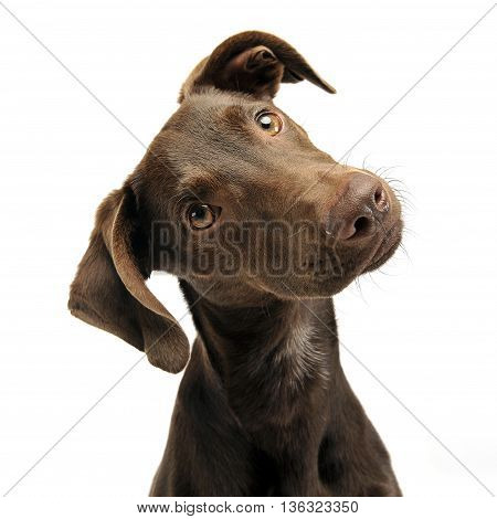 Beautiful Flying Ears Mixed Breed Dog Turns His Head In White Studio