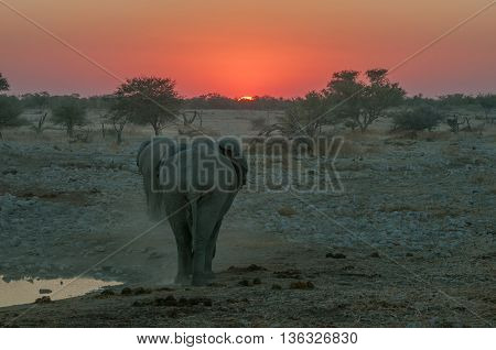 A fiery sunset with elephants walking into the sunset at a waterhole in Namibia