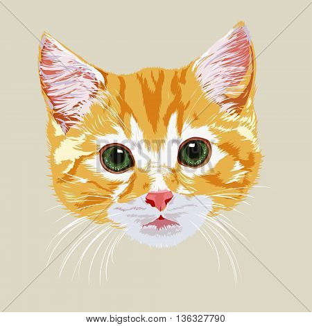 Portrait of red-haired cute tabby kitten on light background.