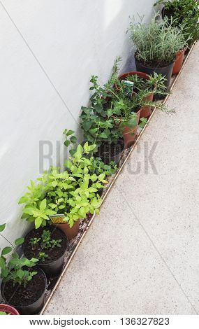 Herbs in porch near window growing in plant pots - marjoram, oregano, rosemary, tarragon, coriander, cotton, lavender - text space.