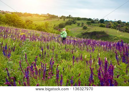 summer - beautiful little girl stands on a hillside salvia meadow