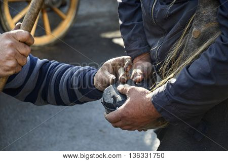 Farrier. Horse's hoof nailing on shoes. A farrier is a specialist in equine hoof care including the trimming and balancing of horses' hooves and the placing of shoes on their hooves if necessary.