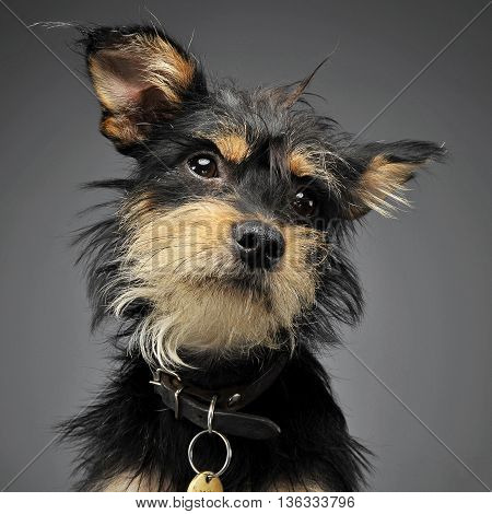 Mixed Breed Funny Dog In A Grey Studio