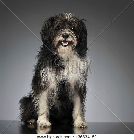 Mixed Breed Funny Dog In A Photo Studio