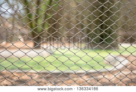 tree inside the outlines of Steel mesh fence
