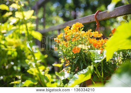 beautiful garden atmosphere with flowers and sunny weather