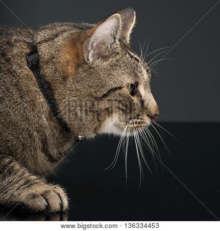 Fat Domestic Cat In A Photo Studio
