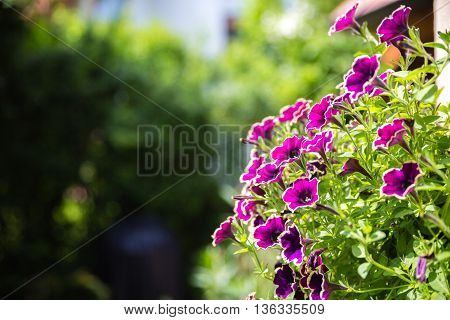 Beautiful garden with flowers on sunny day in summer