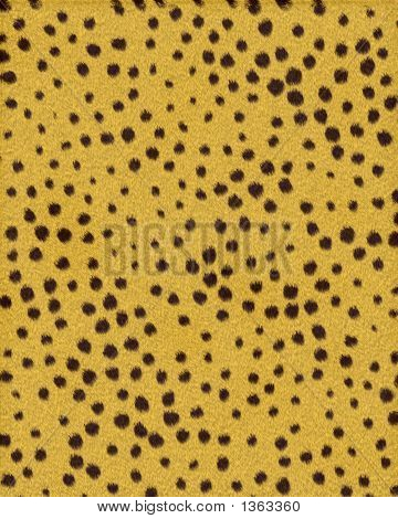Cheetah Broad Variation Short Fur