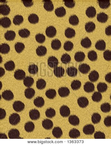 Cheetah Large Spots Short Fur