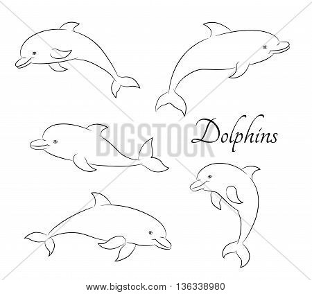 Line sketch illustration with five cute dolphins. Vector illustration.