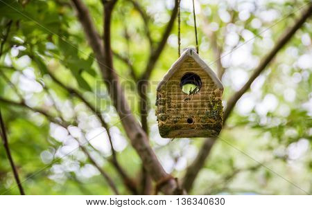 little birdhouse decor on the tree with branches