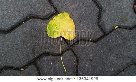 fallen pho leaf on the brick floor