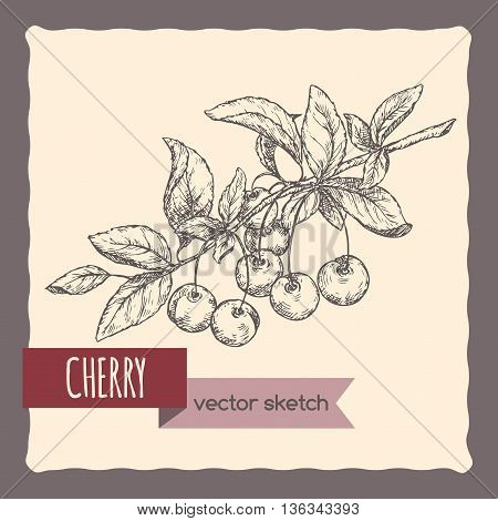 Fresh cherry on a branch hand drawn vector sketch. Great for cooking, gardening, farming or agricultural design.
