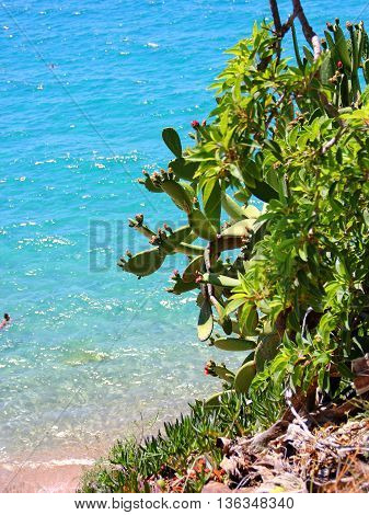 cactus flowered, the flowers yellow orange pink colors, a large number of spines, oval leaves, grows on the cliff on the background of the turquoise blue sea