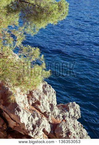 Pine tree on the cliff above Adriatic Sea summer landscape