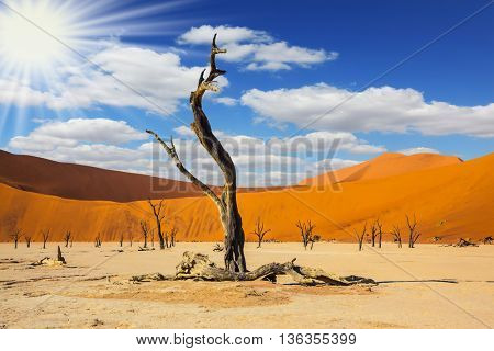 The bottom of dry lake with dry tree in Namib-Naukluft National Park. The long shadows of the evening sunset