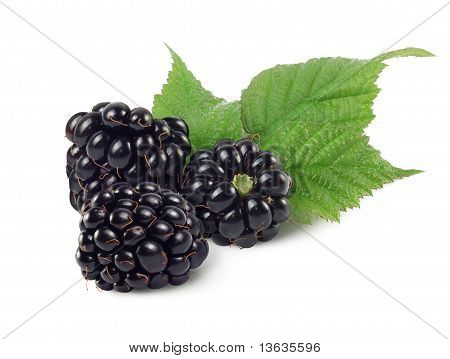 Three Dewberries (blackberries) And Green Leaves