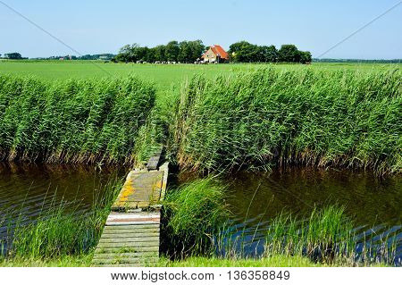 A meadow landscape with farms and a wooden bridge from Dutch Island Ameland