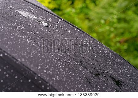 Black umbrella close-up with rain drops against green foliage background.