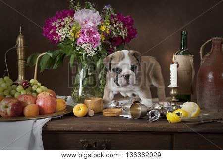 English Bulldog puppy standing on the table with fruit flowers candles and wine in classical Dutch style