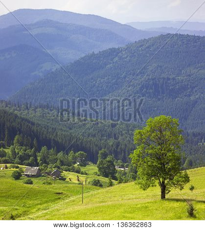 Green tree standing in blue mountains and shepherds houses on green pasture