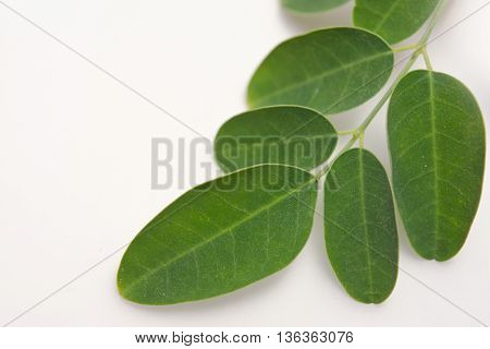 Moringa (Other names are Moringa oleifera Lam. MORINGACEAE Futaba kom hammer vegetable hum Moringa hum bug Moringa bug Hoo) leaf isoalted on white background
