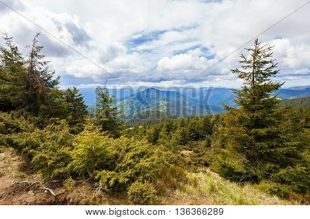 Hiking in the coniferous forests in the Carpathian mountains
