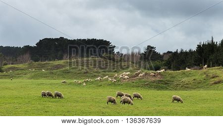 Sandy hill farmland with some sheep grazing on it.