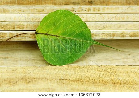Fallen Bodhi leaf on wooden stack background. Fallen Pho leaf on stack of wood.
