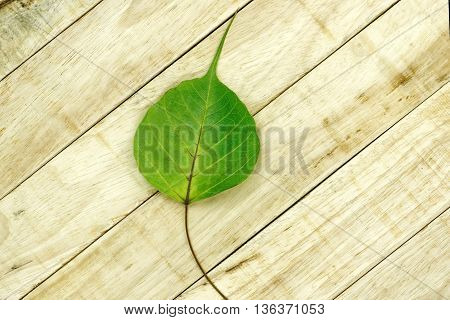 Fallen Bodhi leaf on wooden pattern background. Fallen Pho leaf on wood table.