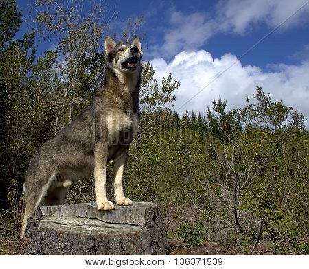 dog stay on the tree in forest blue sky