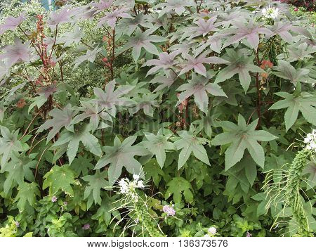 A close-up of an garden showing various leafy plants.