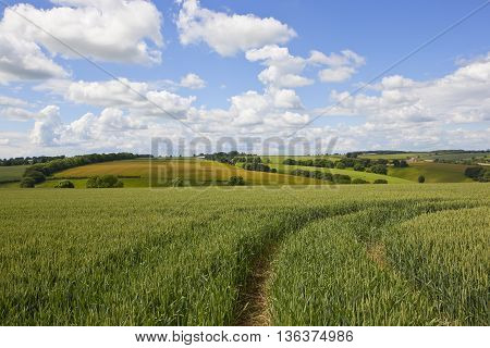 Yorkshire Wolds Landscape With Wheat Field