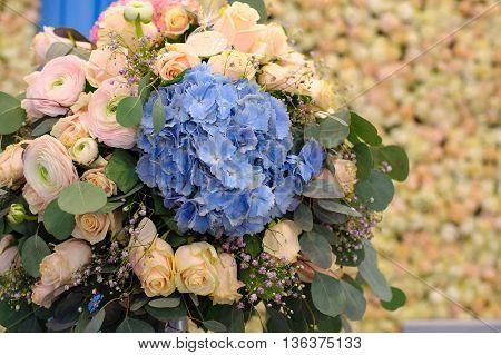 Beautiful blue Hydrangea macrophylla in bouquet of bride.