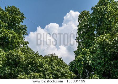 Milky clouds appearing beatifully between two trees