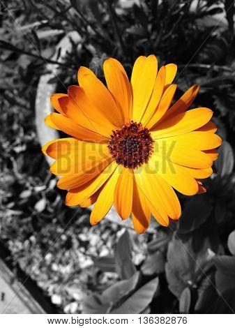 Abstract Colourfull Creative Garden Flower Scene England