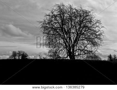 Lone tree with cloudy sky background in black and white
