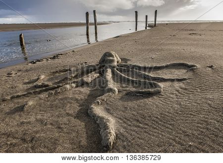 A view of an octopus sand sculpture at Pacific Beach Washington.