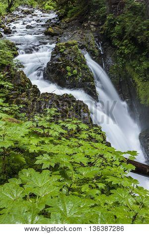 Sol Duc Falls in the rain forest in northwest Washington.